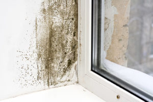 Mold Can Make You Sick