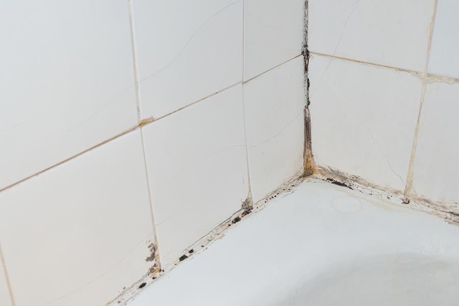 Mold Removal From The Bathroom - Products to remove mold from bathroom